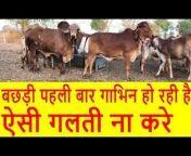 Gir Gau Krushi Jatan Sansthan - Gondal