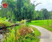 টেংরা দহ   কালিপুর   ধনবাড়ী   যেখানটায় আমার বেড়ে উঠা   আমার শৈশব<br/>YouTube- https://youtu.be/y9BN14ArIjw<br/>SUBSCRIBE To My YouTube   https://www.youtube.com/SaidurRahmanBabu<br/><br/>আমার আলোচিত ভিডিও গুলি দেখুন<br/><br/>নৌকায় পিকনিক বালু নদীতে   Boat Picnic At Balu River<br/>https://youtu.be/EJgMN-ekJAo<br/>Drone Flight At Hatirjheel Dhaka Bangladesh With DJI Phantom 4<br/>https://youtu.be/bK25mWjkeL8<br/>মুকুট হারিয়ে কাঁদলেন জান্নাতুল নাইম এভ্রিল!<br/>https://youtu.be/Gpr0DyQOvbg<br/>Bangladesh Navy's Maritime Counter Terrorism Exercise<br/>https://youtu.be/HZIt8424mNk<br/>Travelling To Koh Larn Coral Island From Pattaya<br/>https://youtu.be/9vPDrt59o7I<br/>Aerial View Of Dhaka City Bangladesh By DJI Phantom 4<br/>https://youtu.be/M9SUhmKuys4<br/>Bangladesh And India Relationship By Fatima Amin<br/>https://youtu.be/LbBYHxf5LL0<br/><br/>Thanks for checking out the video. If you like it, please leave a comment, give it a thumbs up or like, share with your friends and subscribe please. All the best.<br/><br/>Follow Me......<br/>Mail- saidur_babu@yahoo.com<br/>Facebook- https://www.facebook.com/babuvlogbd<br/>iPorosh-https://www.iporosh.com/@saidur_babu<br/>Twitter- https://twitter.com/saidur_babu<br/>Instagram- https://www.instagram.com/saidur_babu<br/>Dailymotion- https://www.dailymotion.com/saidur_babu<br/>Vimeo- https://vimeo.com/saidurbabu<br/>Tiktok- https://www.tiktok.com/@saidur_babu<br/><br/>*WARNING ANTI PIRACY *<br/>======================<br/><br/>Any Person Reproduction, Redistribution Or Re-upload Is Strictly Prohibited Of This Material. Legal Action Will Be Taken Against Those Who Violate The Copyright.<br/>#dhanbari<br/>#tangail<br/>#kalipur<br/>#ধনাবাড়ী<br/>#কালিপুর<br/>#টাঙ্গাইল